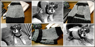 20121118dogsweater_1sakura.jpg